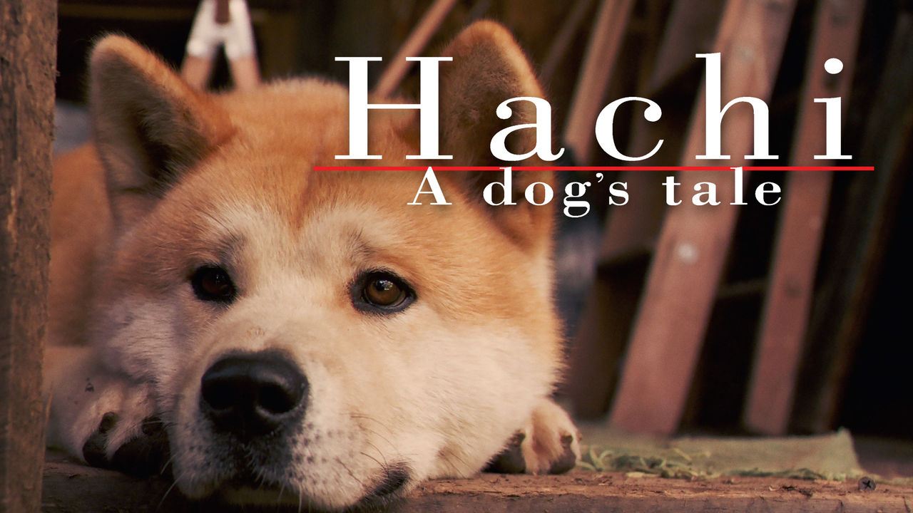Is Hachi A Dog S Tale Available To Watch On Netflix In
