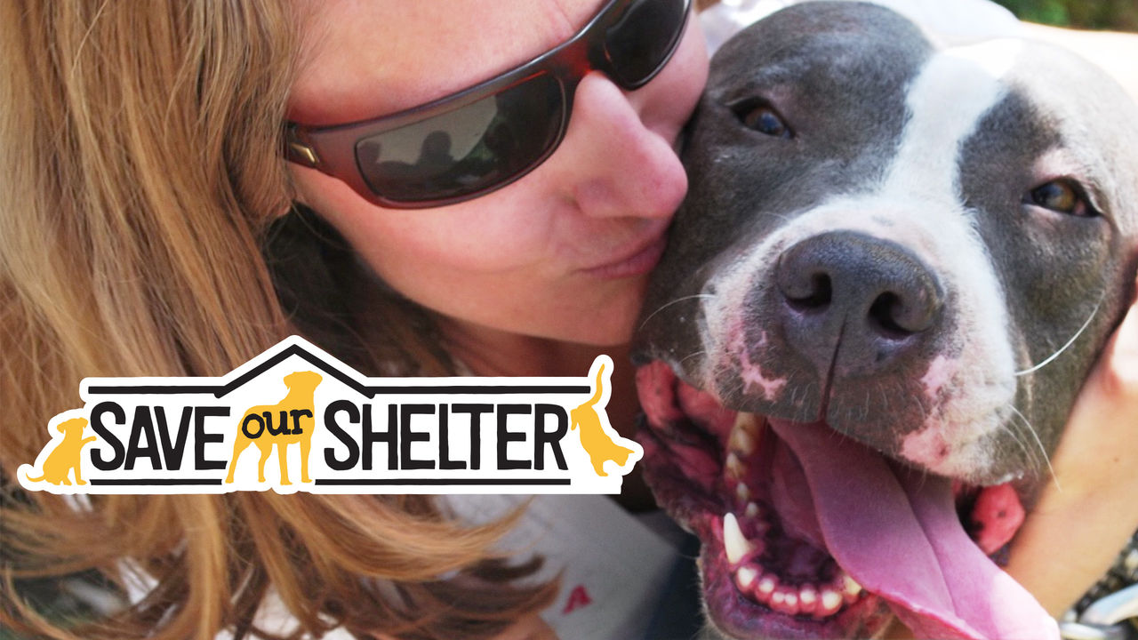 Save Our Shelter on Netflix USA